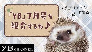 YB7月号紹介_おかか
